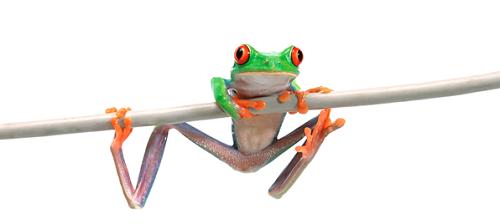 Fridolin der Frosch
