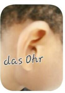 """Bearbeitetes Foto eines Ohrs beschriftet mit """"das Ohr"""""""